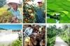 Thông tư số 10/2015/TT-NHNN hướng dẫn thực hiện một số nội dung của Nghị định số 55/2015/NĐ-CP của Chính phủ về chính sách tín dụng phục vụ phát triển nông nghiệp, nông thôn