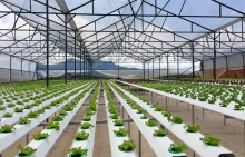 Tiêu chí công nhận doanh nghiệp nông nghiệp ứng dụng công nghệ cao
