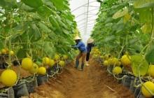 Bao giờ triển khai gói 100.000 tỷ đồng cho nông nghiệp sạch?
