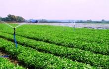 HTX nông nghiệp phải đạt được những tiêu chí nào mới được hưởng chế độ ưu đãi từ Chính sách hỗ trợ của nhà nước?