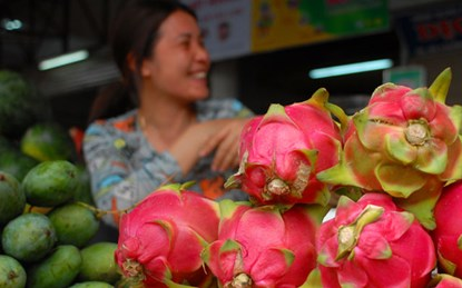 Vietnamese fruits to Russia: no country could replace Vietnam