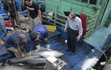 Cá ngừ sang Nhật
