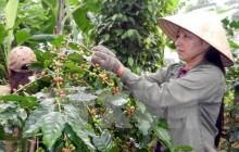 WB phê duyệt 315 triệu USD hỗ trợ nông nghiệp và giáo dục Việt Nam