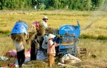 ĐBSCL khó hút vốn FDI vào nông nghiệp