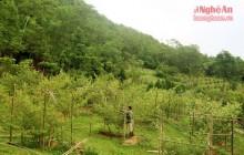 Cử nhân sư phạm lên rừng làm trang trại