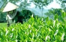 Bắt đầu khảo sát thực địa  Thương hiệu Vàng nông nghiệp Việt Nam nhóm thương hiệu sản phẩm nông nghiệp trên địa bàn tỉnh Thái Nguyên