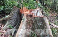 Hơn 8.000m2 rừng bị tàn phá ở Kon Tum