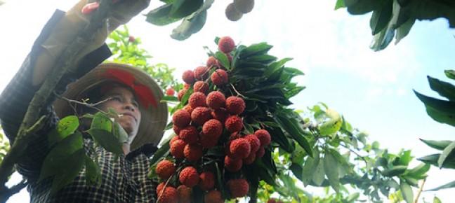 Khuyến khích DN đầu tư KHCN vào nông nghiệp: Phải có hành động cụ thể